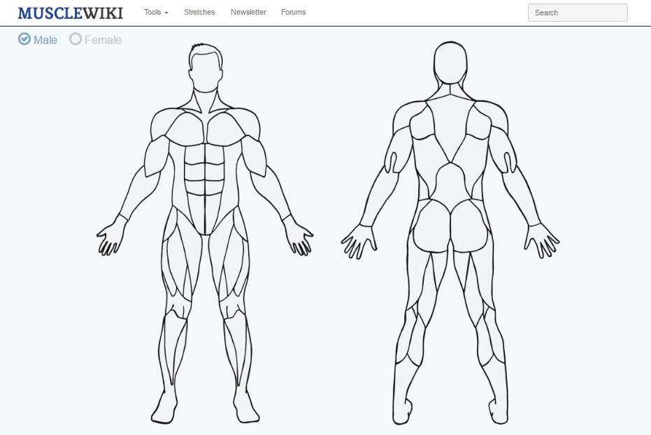 MuscleWiki - Силовые упражнения для всех групп мышц