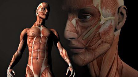 3d-anatomiya