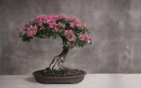 iskusstvo-bonsay