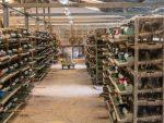 Оборудование для перепелиной фермы – Бизнес-план перепелиной фермы на 1000 голов